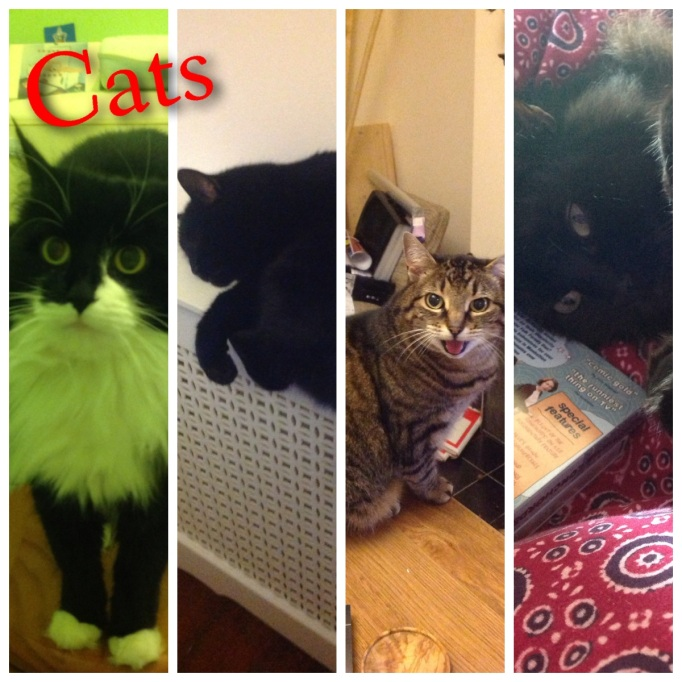 The Slave Master made this rather excellent montage of her cats. Numbers 1 and 4 are the ones in our house.